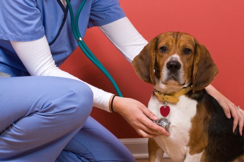 Dog Acceptance & Vaccinations